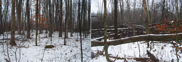 Before and after Hinge cutting for deer