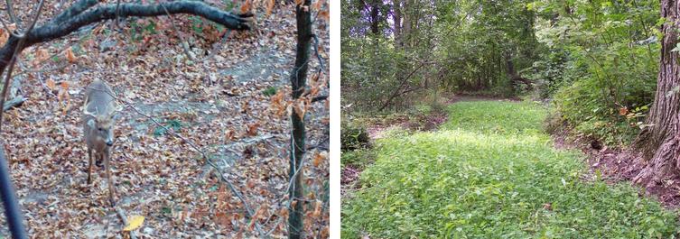 Wide Travel Corridors for Deer habitat