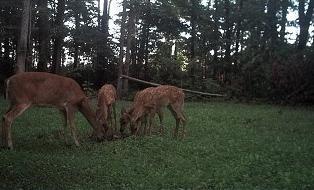 Whitetail Deer Habitat Consultant - Improving Deer Hunting